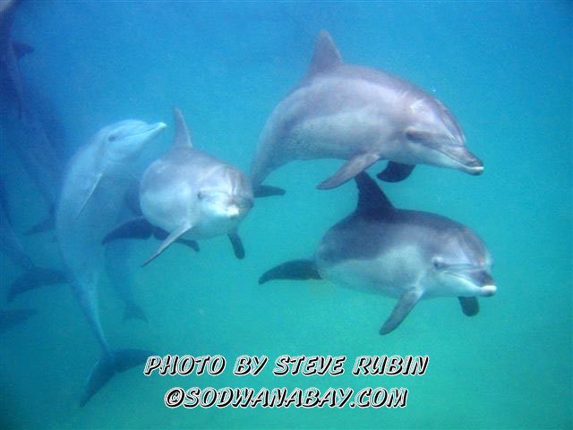 Dolphins on two mile reef Sodwana Bay