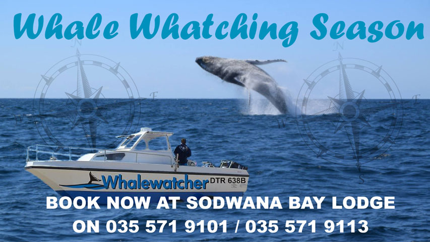 Whale Watching Charters